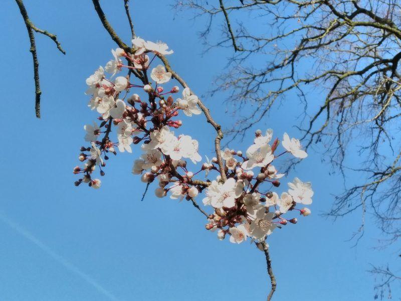 spreuken over het voorjaar rust en filosoferen   KlankVerbinding spreuken over het voorjaar